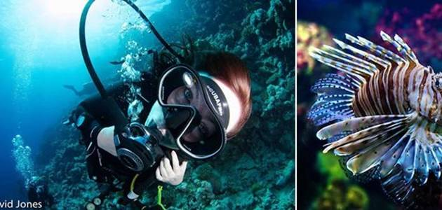 Diving in Mozambique!